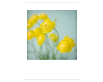 Buttercup Photo Card, Floral Greeting Card, Flower Blank Card,