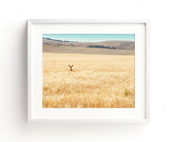 """Hiding in the Barley"" - landscape photography"