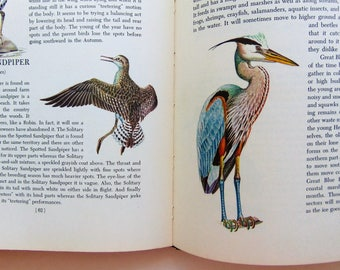 1950 Introduction To Birds