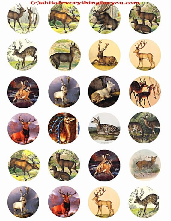 deer bucks does collage sheet 1.5 inch circles clip art digital download graphics images  animal nature art craft pendant pins printables