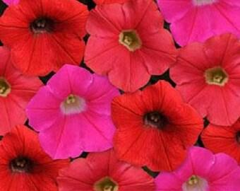 Petunia Seeds Shock Wave Mix Amp 25 Pelleted Seeds