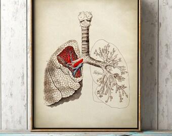 Lungs Anatomy print, vintage anatomy poster, medical wall art, doctor gift, anatomy poster, anatomy print, home decor