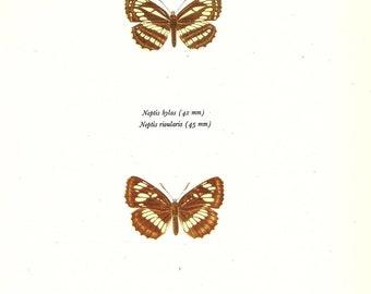 BUTTERFLY PRINT Art Original 1965 Book Plate 112 Beautiful European Sailer and East-European Butterflies Flower Garden Nature