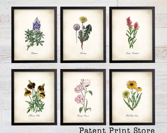 Texas Wildflower Botanical Art Prints. Botanical Print. Wildflower Print. Botanical poster. Botanical Illustration. Botanical Art. Farmhouse