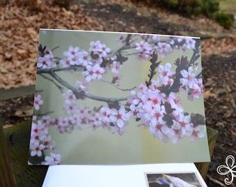 Cherry Blossom (Photo) Greeting Card