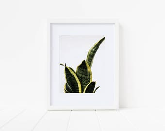 Printable Wall Art—Snake Plant, Mother-In-Law's Tongue, Home Decor, Gift