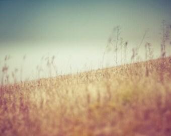 summer landscape nature photography / field, blue sky, summer wheat, mint green,yellow, blue, gold, golden, angle / tilt / 8x10