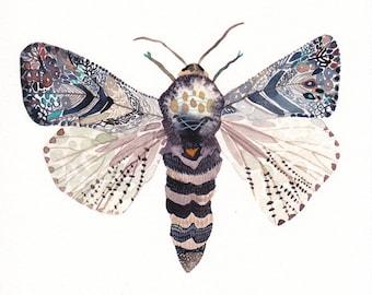 "Moth - 11"" x 11"" Archival Print"
