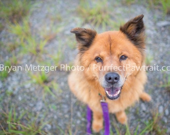 Dog Field Portrait Print, Fine Art Photography Print, Purrfect Pawtrait Pet Photography, Animal Photography