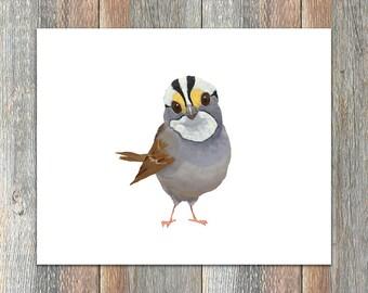White-throated Sparrow Bird Print