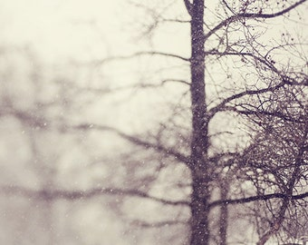"""Winter Landscape Photograph, """"In the Moment"""" Snow, White, Gray, Tree Branches, Home Decor, Ethereal"""
