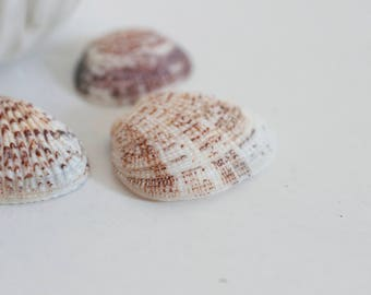 Round natural shells - one hole - set of 5