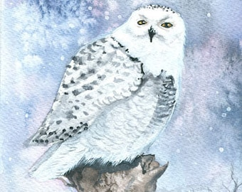 Snowy Owl Wildlife Watercolor Fine Art Print by Molly Harrison 8 x 10