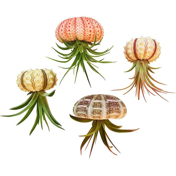 Jellyfish Air Plant Holders 4 Pack: 4 Pc Hanging Tillandsia Air Plant Jellyfish Set / Includes Air