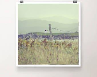 OnLooker - Fine Art Print Photography Photo sky bird fence landscape nature Ireland coast grass nature