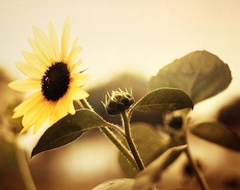 Nature Fine Art Photography Print, Sun Flower Wall Art, Vintage Home Decor- Mountain Sun Flower