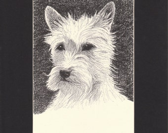 West Highland White Terrier Vintage Dog Print by C.Francis Wardle - 1935 Print of Drawing, Mounted with Mat - Westie Picture