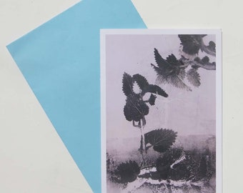 Pack of 6 blank art greeting cards A6 from original botanical print by Stef Mitchell Nettle Made with love from nature in Yorkshire