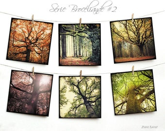 Set of six postcards 14x14cm - 02 Brocéliande serie