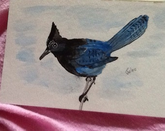 Stellar jay card or picture