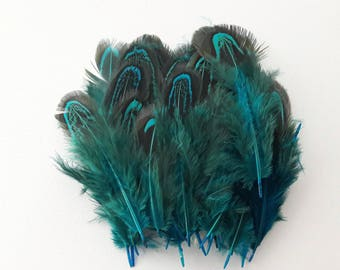 set of 25 feathers blue turquoise