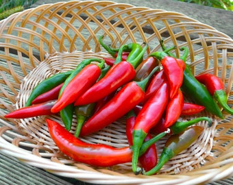 Bulgarian chili pepper fishy, Ribki heirloom pepper 20 seeds