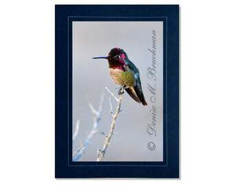 Hummingbird Photo Greeting Card - Bird Card Blank Inside - Blank Hummingbird Note Card - Pink Blue Bird Photo - Anna's Hummingbird Card