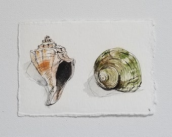 sea shells, original watercolor and ink painting