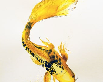 Koi Fish-reproduction print matted to 16 x 20.
