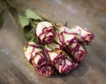 Dried Roses, Plum Roses, Cream Color Roses, Dried Flowers, Stemmed Roses, Dried Rose Bunch, Everlastings,  Craft Roses,  Long Stemmed Roses