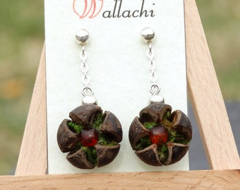 Earrings made of wallachi seed pods and amber