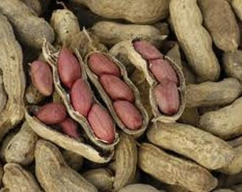 Peanut Seeds Grow Your Own Peanuts, Easy to Grow, Container Gardening, 5 Seeds