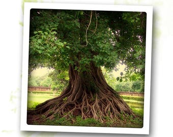 Roots - art photo signed 20 x 20 cm