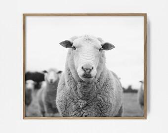 bw sheep, sheep print, sheep art, printable farm print, country print, country art, printable wall art, wall decor, black and white print