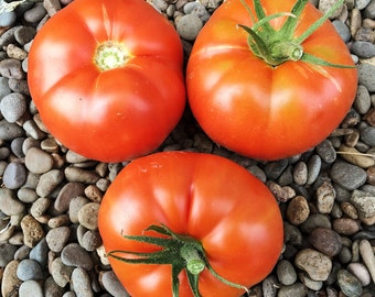 Bonny Best Tomato Seeds, Vegetable Seeds, Vegetable Garden, Organic Garden, Red Tomato Seeds, Heirloom Tomato Seeds, Organic Vegetable Seeds