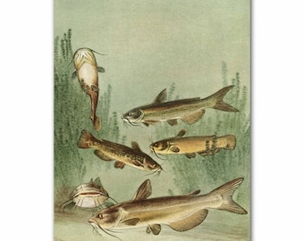 "Vintage Fish Print (Rustic Cabin Decor, 1930s Fishing Art)--- ""Catfish"" No. 105"