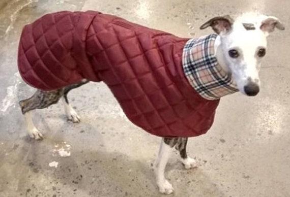 Italian greyhound coat readymade