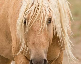 Corona Comes Close - Fine Art Wild Horse Photograph - Wild Horse - Corona - Sand Wash Basin - Fine Art Print