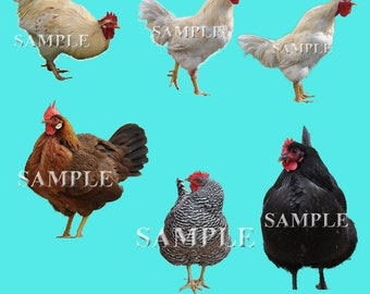 Chicken and Rooster overlays