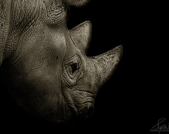 Rhino print, animal photography, nature photography, black and white, animal picture, wildlife, framed print,  5x7, 8x12, 11x14, 16x24