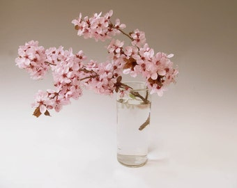 Cherry Blossoms Fine Art Photograph
