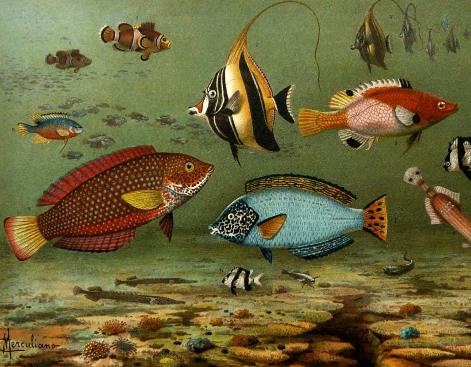 1897 Antique fine lithograph of COLOR FISHES. Aquarium fishes.
