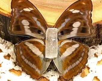 Perri Butterfly Barrette