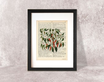 Red hot chili peppers spice print-Kitchen wall art-Hot chili peppers on book page-herbs print-rustic print-home decor-NATURA PICTA-NPDP075