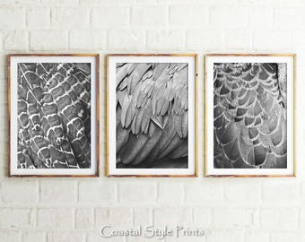 Feathers Prints, Set Of 3 Prints, Black and White, Modern Wall Decor, Photography, Feather Print, Feather Art, Prints, Wall Art, Print Sets