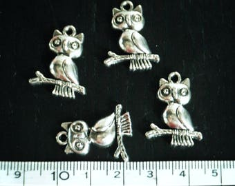 Charm OWL / OWL on branch x 4 - B021