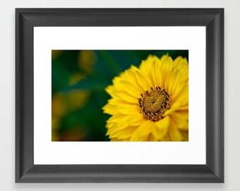 Yellow Daisy Photograph Flowers, Macro Photography, Flower Wall Art Prints, Daisy Flower Art Print, Yellow and Green Wall Art