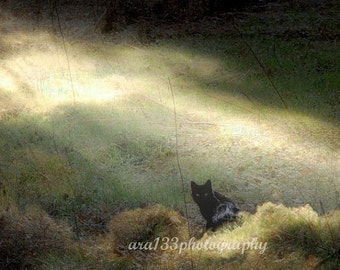 Black Cat Art Photography - magical black cat animal photo pet sun - Large Wall Art -  20x20 inch Fine Art Photography Print - Bewitched
