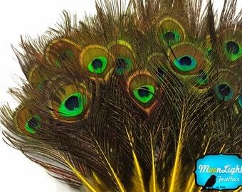Hair Feathers, 10 Pieces - YELLOW MINI Natural Peacock Tail Body feathers with Eyes : 3642