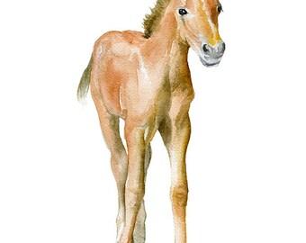 Horse Watercolor Painting - 11 x 14 - Giclee Print - Nursery Art - Pony Foal Farm Animals